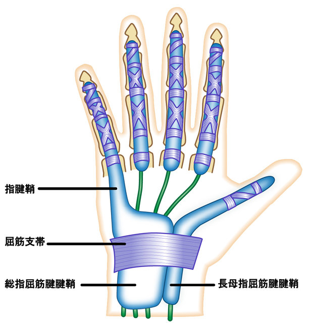 手の構造.jpg